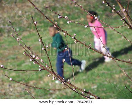 Peach tree run