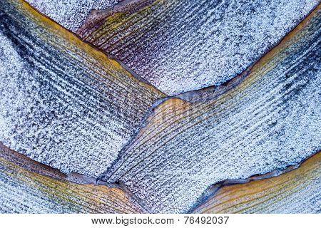 Palm Bark Geometry