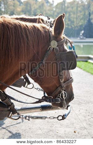 Horses With Blinders