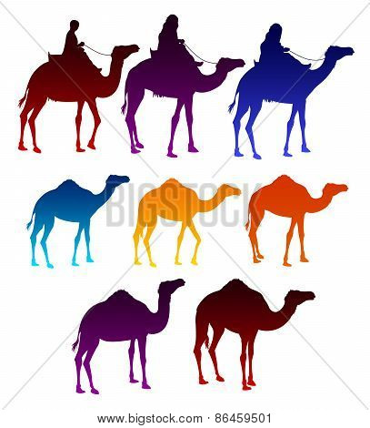 Set of Colorful Camels and Arab Men Riding in Camels