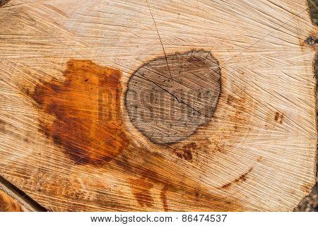 Crosscut Of A Log - Texture