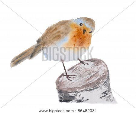 Robin Redbreast Bird Watercolor Illustration.