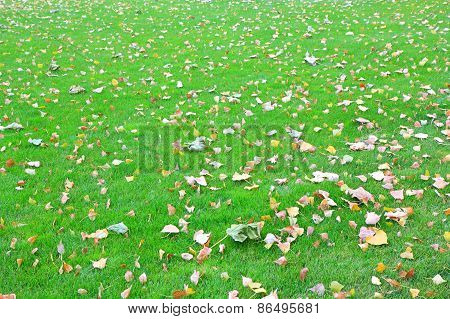 Fallen Leaves From Trees On The Green Grass