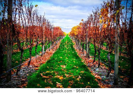 Winery Near Blenheim New Zealand. Picturesque Panoramic View In Autumn Color