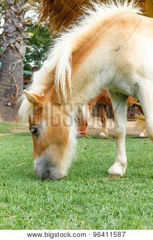 Horse Eat