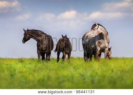 Mares with colts