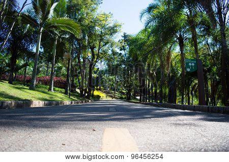 Estrada asfaltada rodeado por árvores em um parque poster