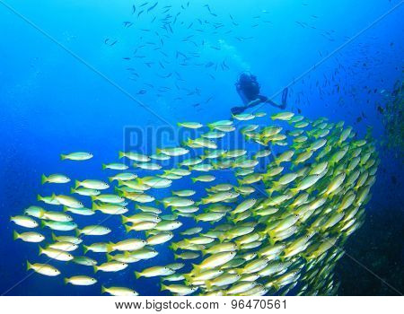 School of fish and scuba diver on underwater reef