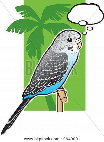 Baby Blue Budgerigar Parakeet