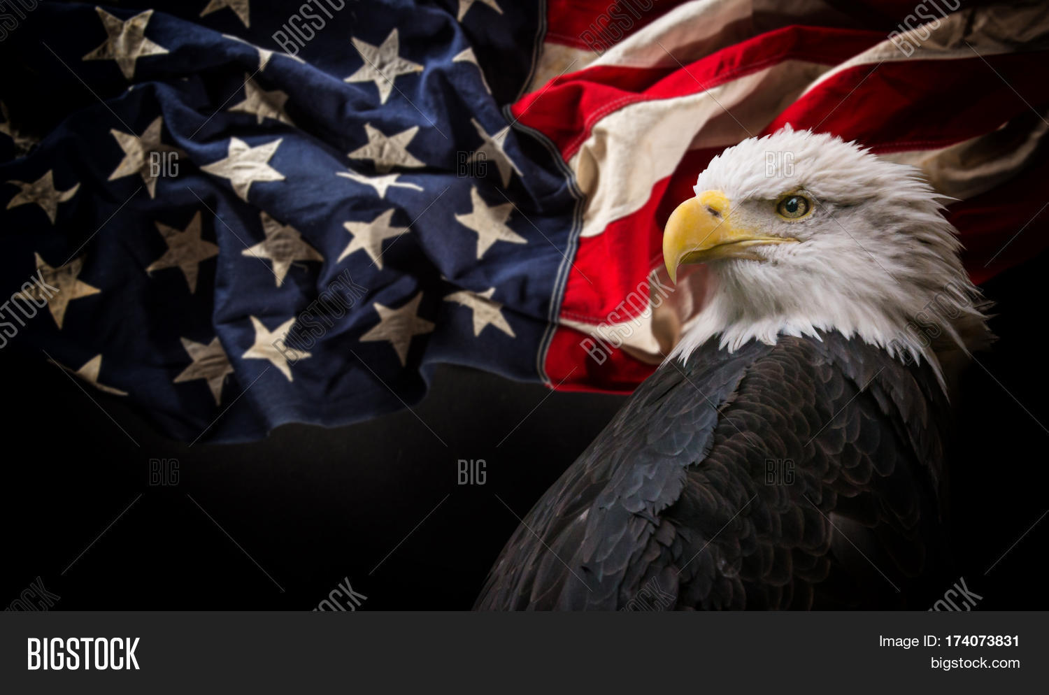 American Symbols Of Patriotism American Bald Eagle - ...