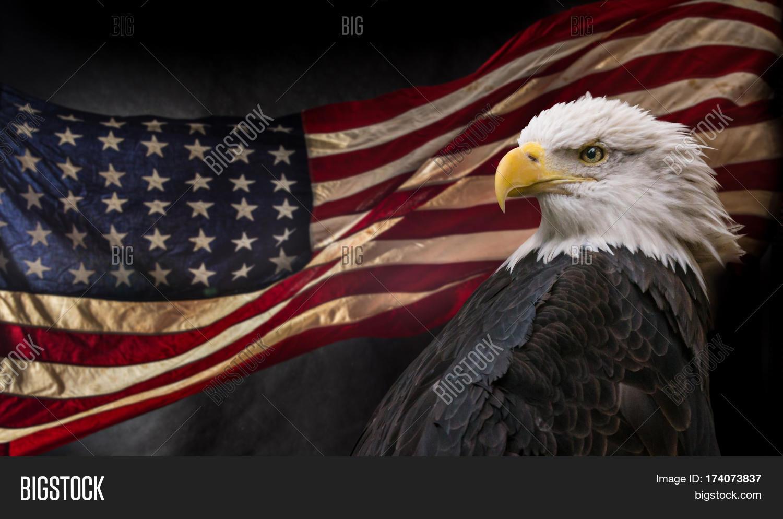 American bald eagle symbol image photo bigstock american bald eagle symbol of america with flag united states of america patriotic buycottarizona Choice Image