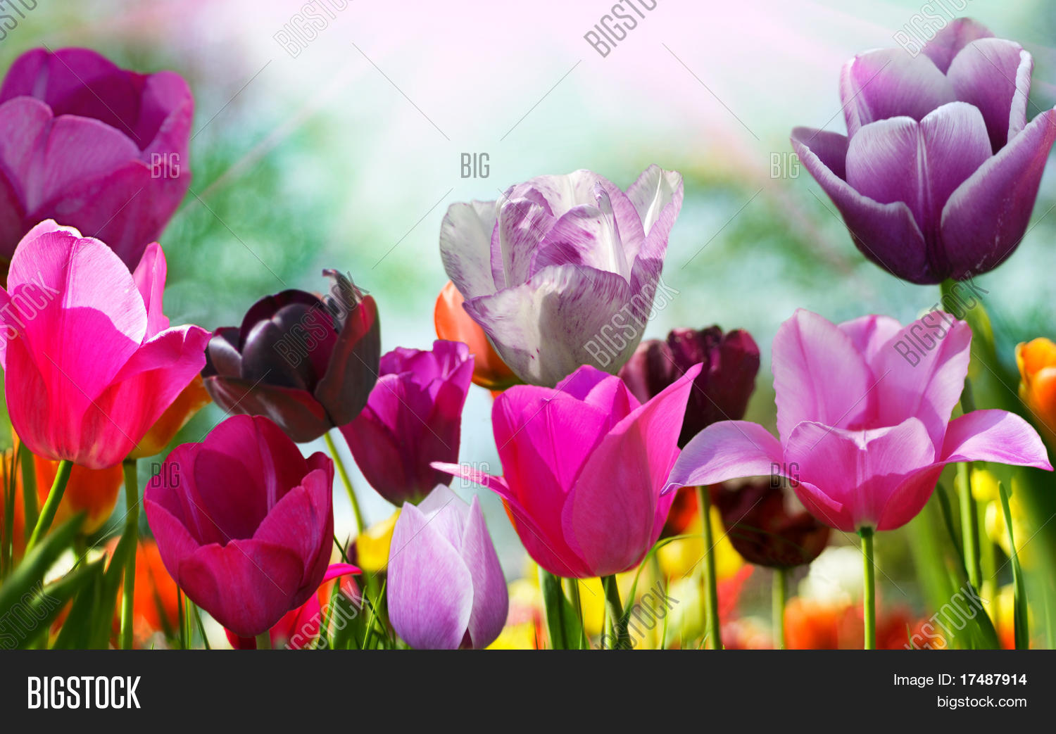 Beautiful Spring Image Photo Free Trial Bigstock