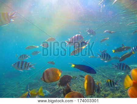 Underwater landscape with tropical fish and sunlight. Sun and blue water with oceanic life. Coral reef ecosystem. Colorful aquarium fishes. Dascillus butterflyfish parrotfish swimming in sea water