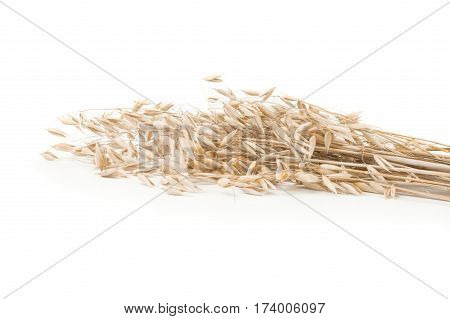 Oats spikelets isolated on white background cutout.