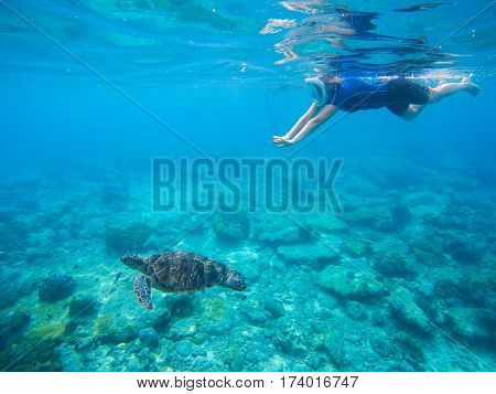 Woman snorkeling with green turtle underwater photo. Sea turtle with swimming woman in mask and snorkeling gear. Exotic sea animals. Tropical island vacation sport activity. Sea lagoon with tortoise