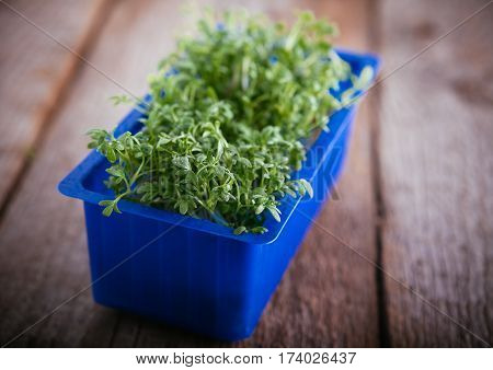 Fresh edible healthy watercress in the box