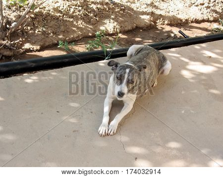 Very sad dog in Mayskiy in Uzbekistan