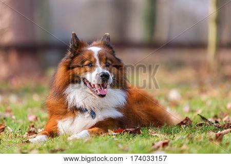 Portrait Of A Lying Elo Dog