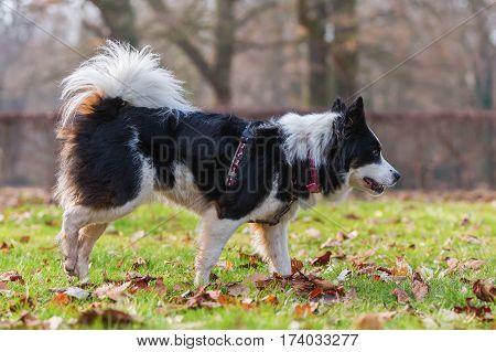 Elo Dog On The Meadow