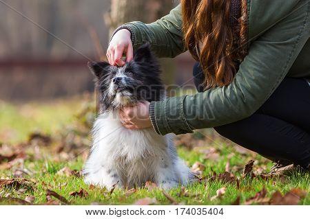 Woman Strokes Her Elo Puppy