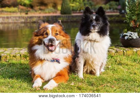Portrait Of Two Different Elo Dogs