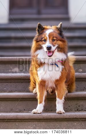 Elo Dog Sitting On Stairs