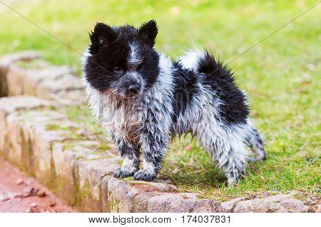 Portrait Of A Wet Elo Puppy