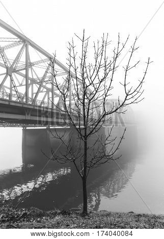 Tree in front of large interstate bridge.