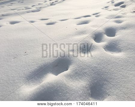 Animal tracks in freshly fallen snow on sunny day with sparkling snowflakes