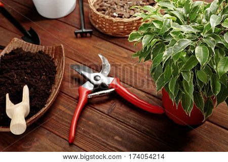 Beautiful plant and gardener equipment on table