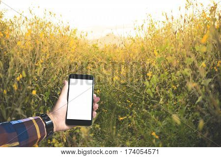 Hand in hipster shirt holding blank smartphone with abstract yellow flower with flare background for mocup your product display.