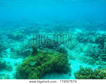 Underwater landscape with coral reef and blue coral fishes. Tropical sea lagoon with sea animals. Undersea view in exotic island seashore. Snorkeling image from warm tropical sea. Young coral polyps