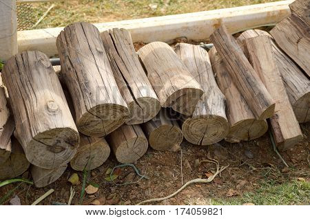 close up deforested cut tree wood in country farm