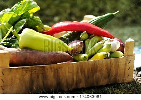 Fresh and colorful vegetables in the box in the garden close up. Healthy lifestyle concept with home grown bio vegetables