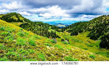 Hiking through high Alpine Meadows with Wildflowers to the top of Tod Mountain in the Shuswap Highlands of central British Columbia, Canada