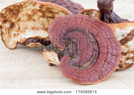 Ganoderma Lucidum Mushroom On Wood