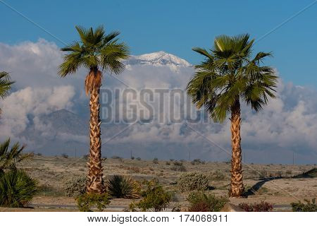 Blue sky behind a group of palm trees in the desert