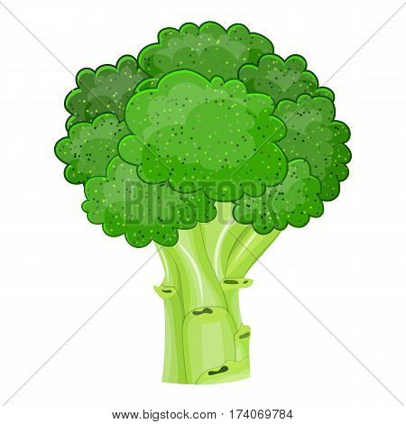 Fresh Vegetable broccoli isolated icon. broccoli for farm market, vegetarian salad recipe design. vector illustration in flat style