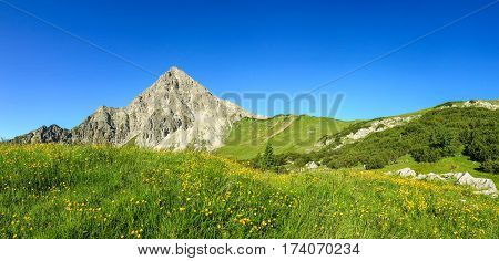 Hiking on flower meadow and steep mountain Geisshorn. Springtime or summer in the alps.
