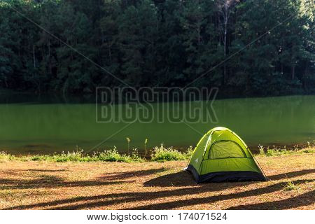 tent under the pine forest at morning against the bright sunlight Pang-Ung in Thailand.