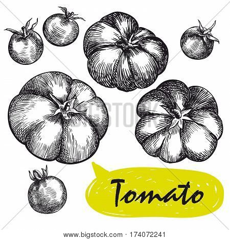 tomatoes. set of hand drawn vector sketches on a white background