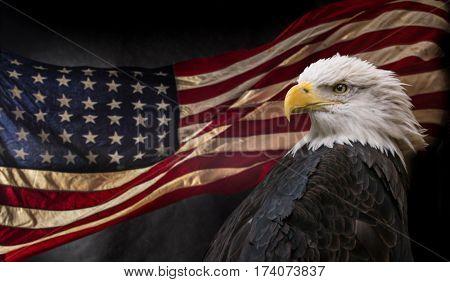American Bald Eagle - symbol of america -with flag. United States of America patriotic symbols.