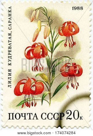 USSR- CIRCA 1988: A Stamp Printed In Russia Shows Flowers Lily (Lilium Martagon) Circa 1988.