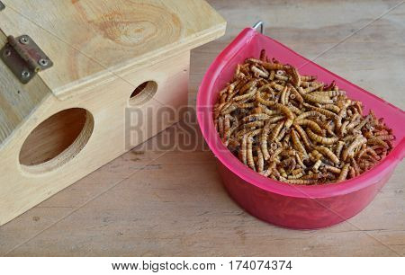 dried worm for feeding rodent or bird with lizard and little wooden house