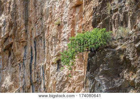 Vertical wall and tree over the rocks