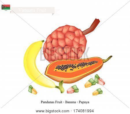 Vanuatu Fruit Illustration of Papaya Banana and Pandanas Fruits. Three Popular Fruits in Vanuatu..