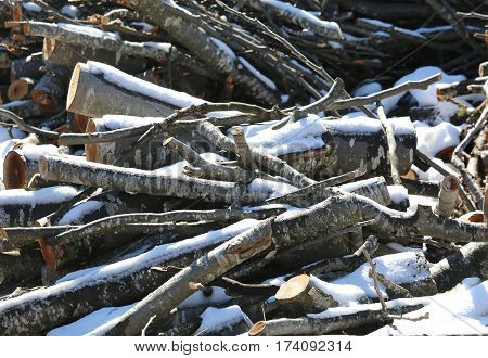 Logs Cut By Lumberjack In The Woodshed With White Snow