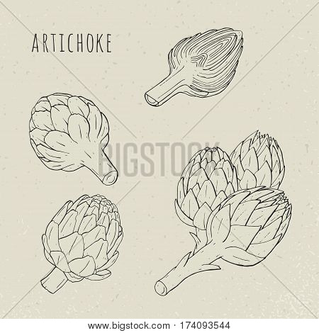 Sketch vector illustration. Artichoke set hand drawn botanical isolated and cutaway plant.