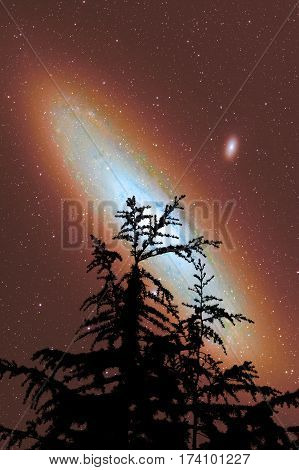 Silhouettes of a tree with starry skies and Andromeda galaxy.