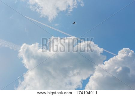 Blue sky with white clouds contrails and the flying black bird on a sunny summer day